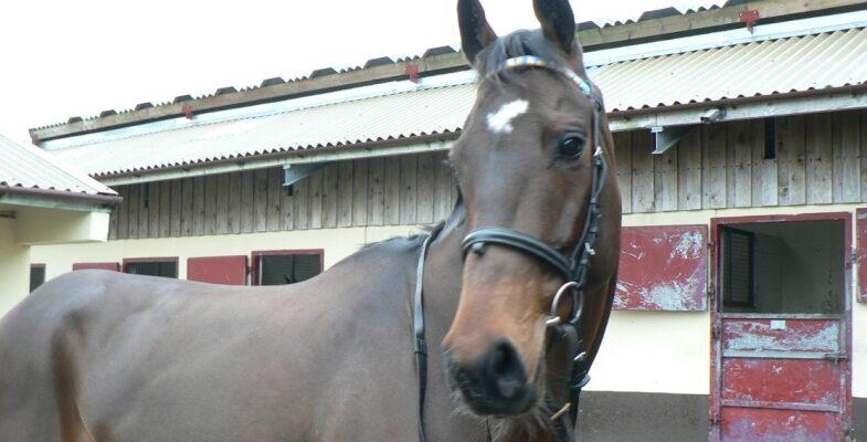 Equus Dancer