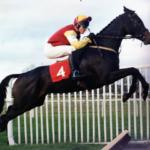 Statley Home Horse
