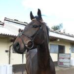 Equus Leader